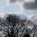 Photos: 冷たい冬空