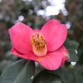 Photos: かわいい花弁ですね