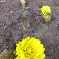 Photos: 春の息吹を・・・