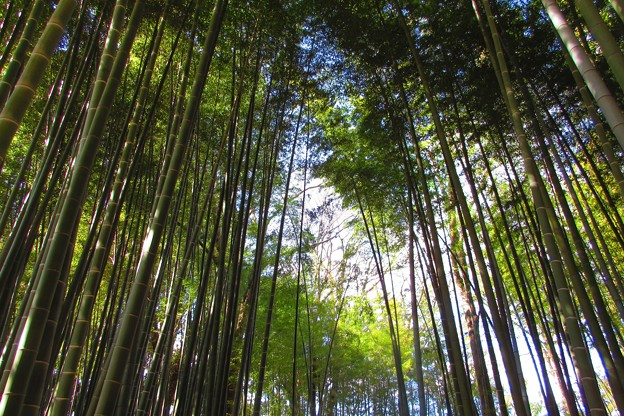 Photos: 竹空、気持ちがいい~