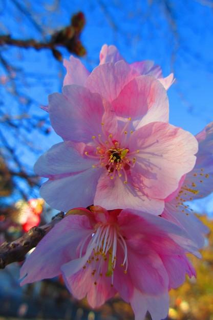 綺麗な花弁たち