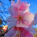 Photos: 綺麗な花弁たち
