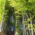 Photos: 竹林の小路