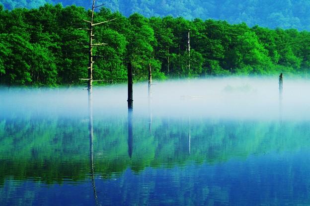 大正池の潅木