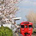 Photos: 春の駅