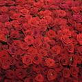 Photos: Rose