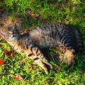 Photos: 猫、ころりん