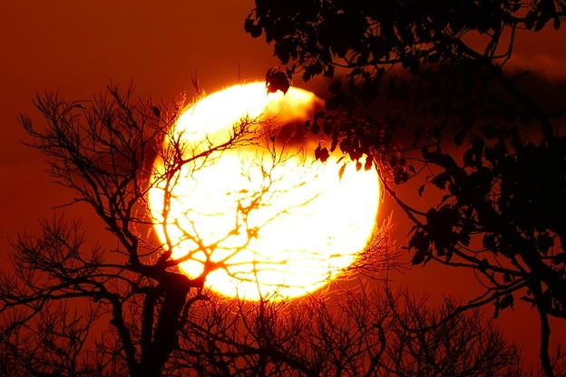 Photos: 熱い朝日