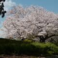 Photos: 春の風景