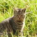 Photos: 草原の猫