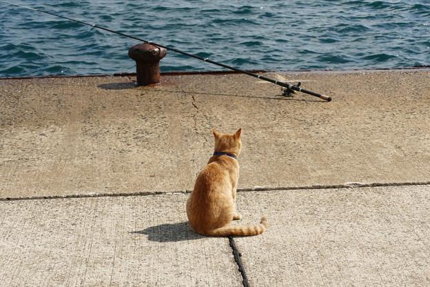 釣りの見張り役