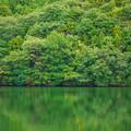 Photos: 水と森
