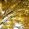 Photos: Yellow Sky