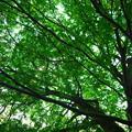 Photos: 初夏の樹