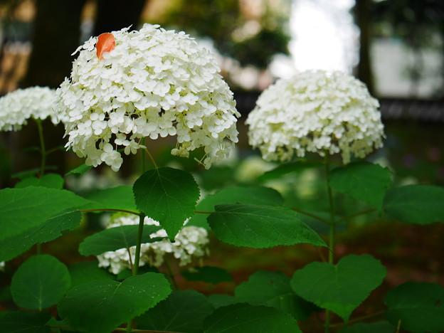 葉っぱでオシャレ