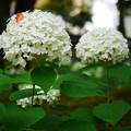Photos: 葉っぱでオシャレ