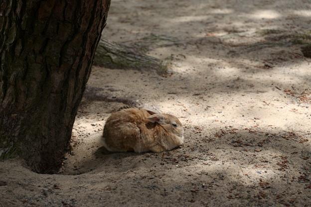 木陰のモフモフ