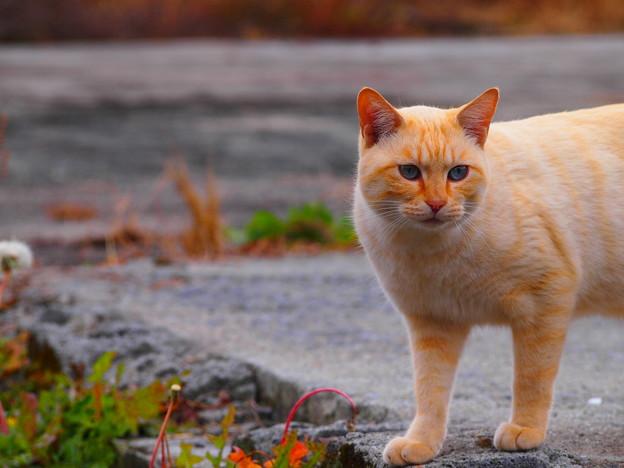 田舎道に猫