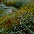 Photos: ビニールの隙間から生える