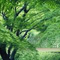Photos: 新緑の坂