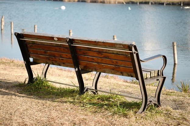 池を眺めるためのベンチ