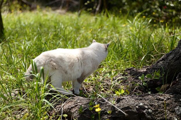 草原の中を探索