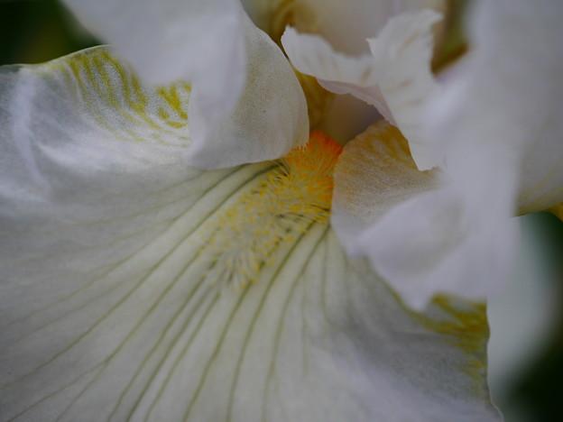 初夏の白いドレス