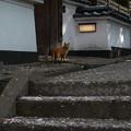 Photos: 猫に遭遇