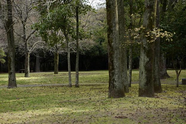 早朝の緑地公園