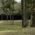 Photos: 早朝の緑地公園