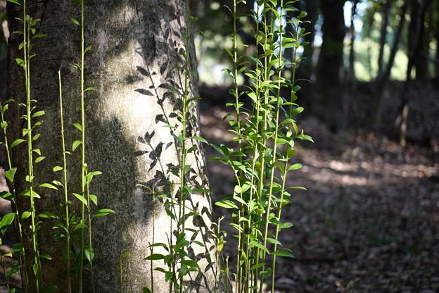 樹の根本から生える