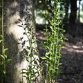 Photos: 樹の根本から生える