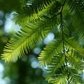 Photos: 光を浴びる葉