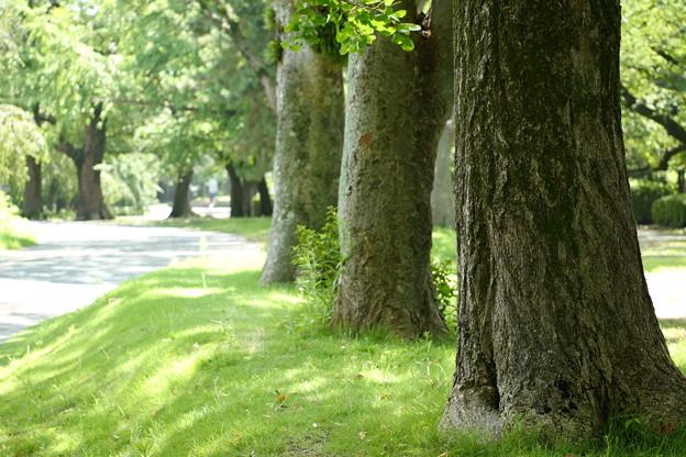 真夏の散歩道