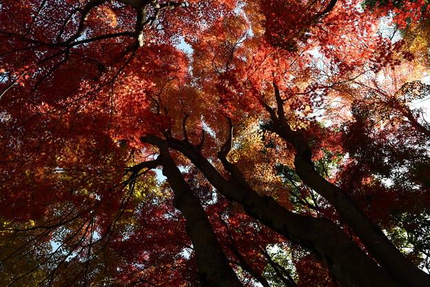 Photos: 空高く秋