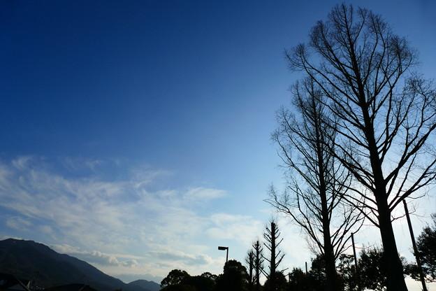 冬の午後散歩