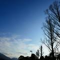 Photos: 冬の午後散歩
