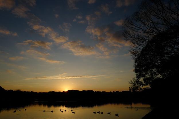 朝日を眺める