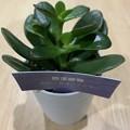 Photos: 渕上真希観葉植物を育てます!その2