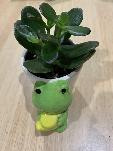 渕上真希観葉植物を育てます!その3