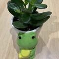 Photos: 渕上真希観葉植物を育てます!その3