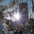 写真: 冬の陽