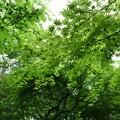 Photos: 0528003