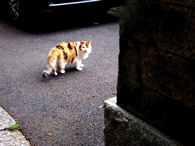 滝野川 正受院 猫