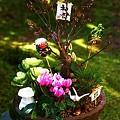 ☆1月のアルバム(花)