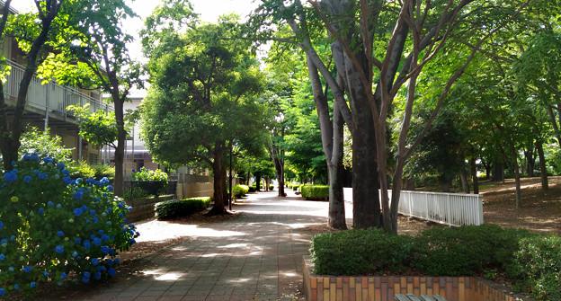 上柴ニュータウン 遊歩道