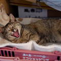 Photos: あくび
