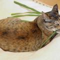 Photos: 草食系猫