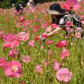 花摘みの日?