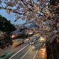 写真: 夜桜(靖国通り)